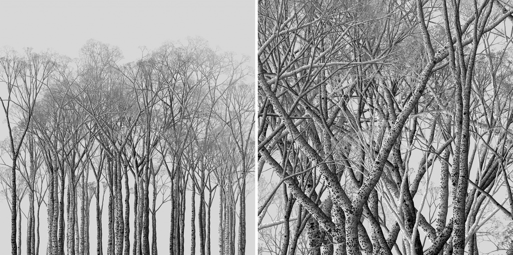How I Drew A Pencil Sketch Like Forest With Processing Generativeart